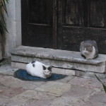 Kotor had cats roaming freely and a Cat Museum.